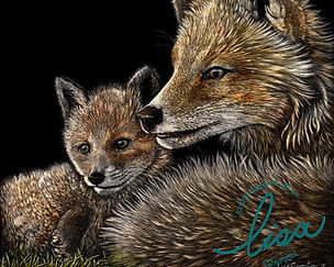 Scratchboard of two foxes created by artist Lisa Compton