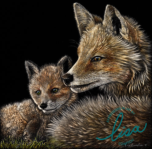 "Scratchboard painting of two red foxes titled ""Foxes"" by artist Lisa Compton"