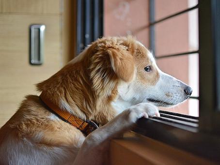 Direito de Visita a Animal de Estimação