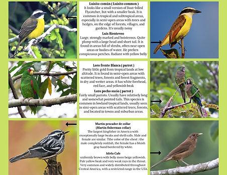 Bird watching guide. Bird watching in Mexico