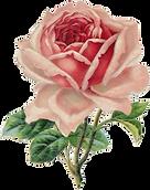 sccpre.cat-flores-y-pajaritos-vintage-18