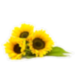 sunflower_ml.png