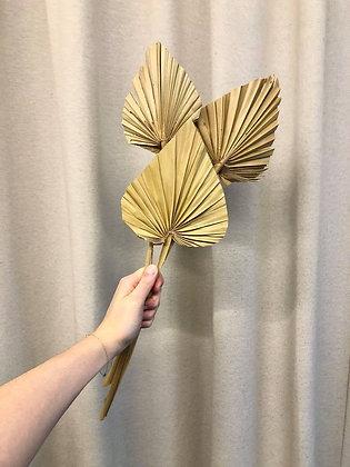 Spear Palm 3st