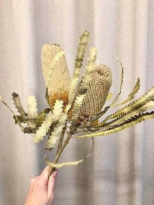 Banksia 2st