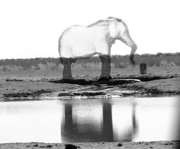 Disappearing Series (African Elephant)
