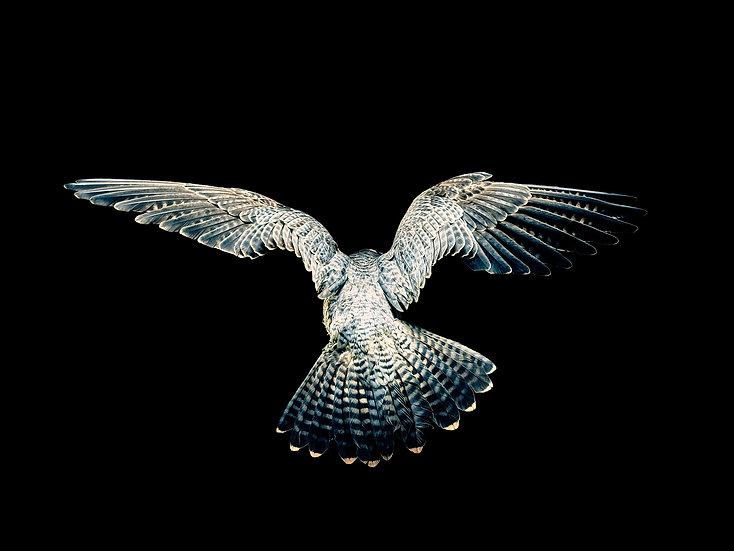 Christopher Wilson / The Bird of Kings