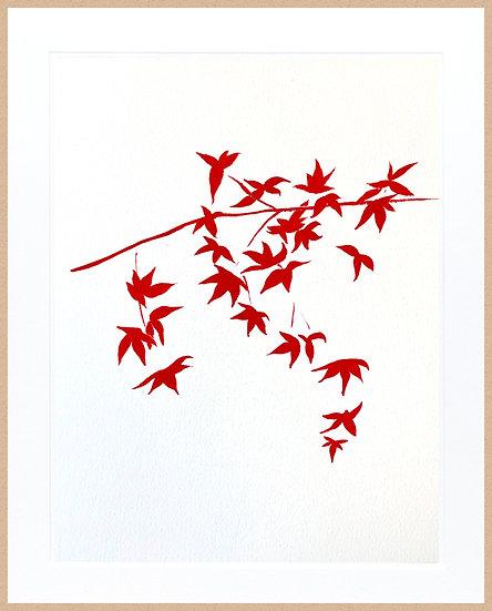 Marc Dubrule / Les petites feuilles Momiji