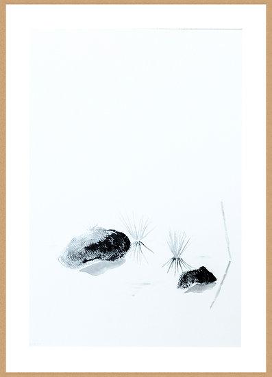 Marc Dubrule / Lac, Roseaux, Rocher