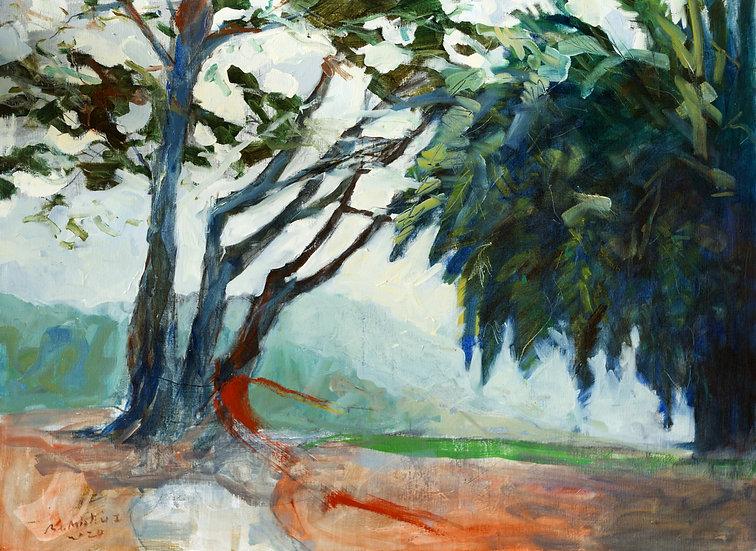 Bertrand de Miollis / Les arbres chuchotent à son passage