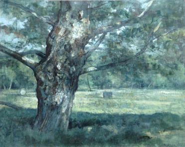 Le Grand Chêne à La Millière