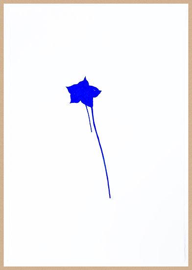 Marc Dubrule / La solitaire