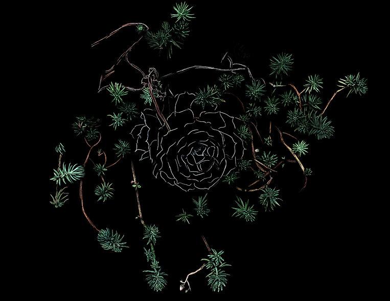stephane-bellanger-fleurs-grasses-galeri
