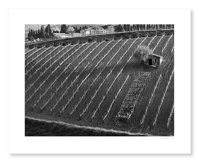Costanti Vineyards, Brunello