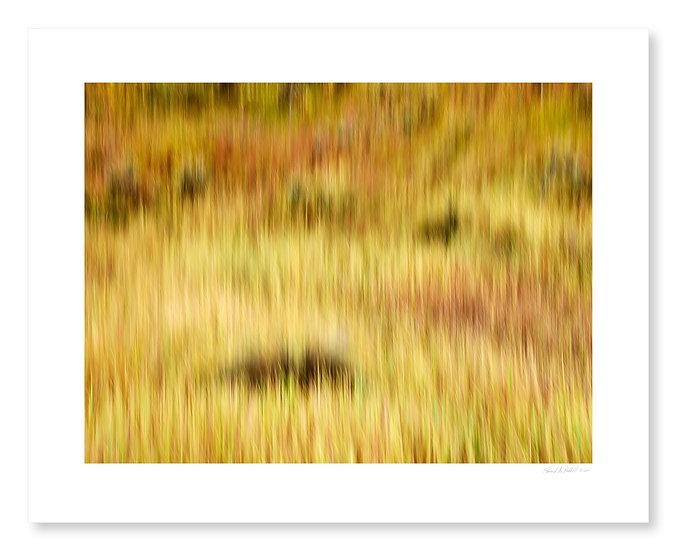 Fall Colors #10