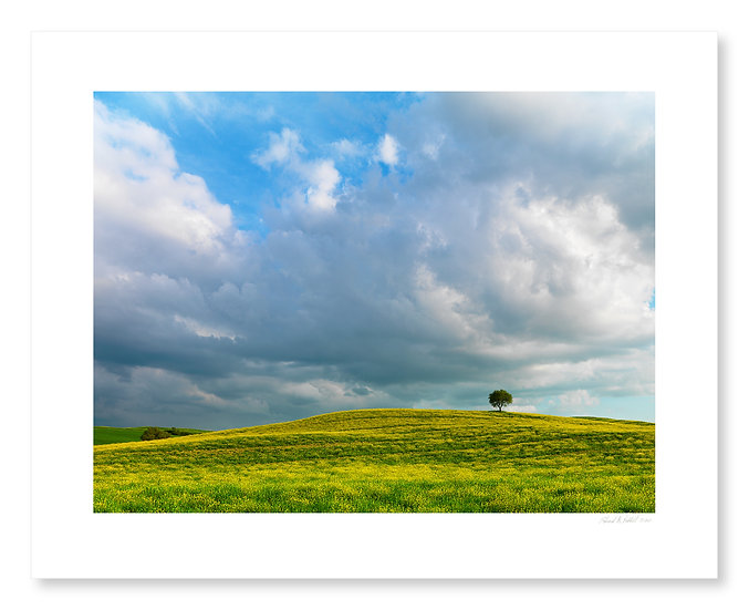 Lone Tree, Val D'Orcia