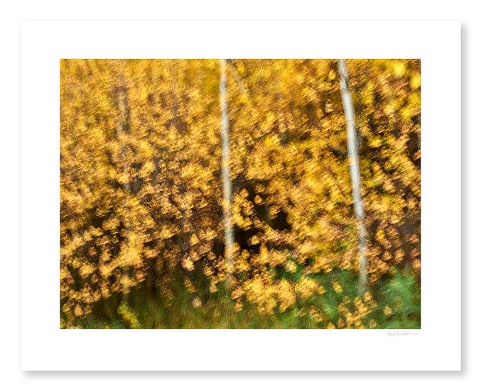 Fall Colors #14