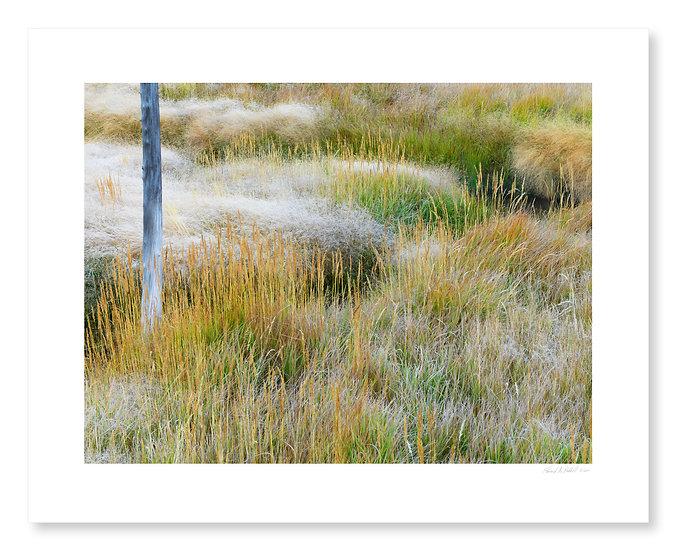 Hot Springs Grasses