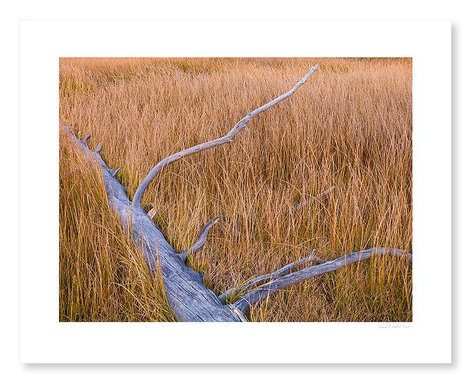 Dead Tree & Grasses