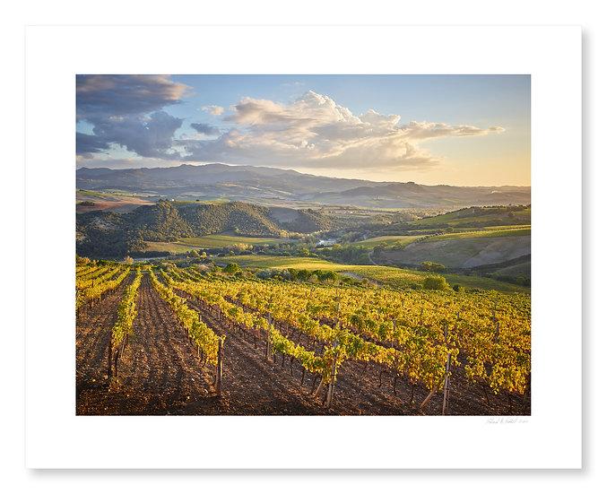 Vineyards, Ciacci Piccolomini