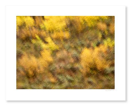 Fall Colors #8