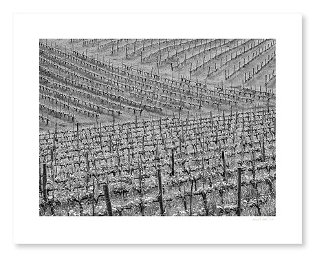 Vineyard Patterns