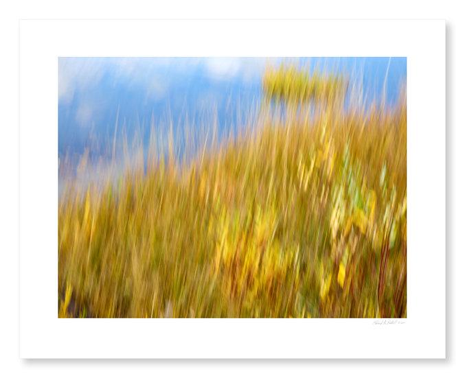 Fall Colors #19