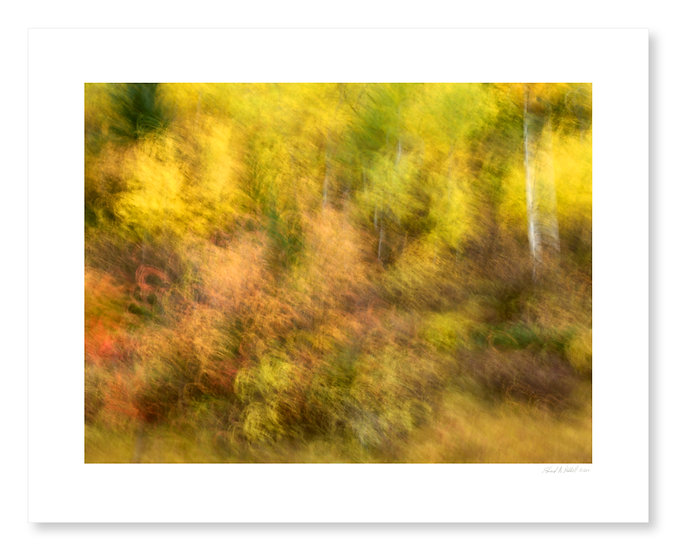 Fall Colors #7