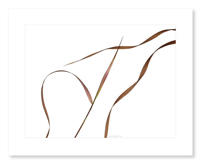 Grasses #169