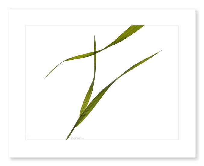 Grasses #131