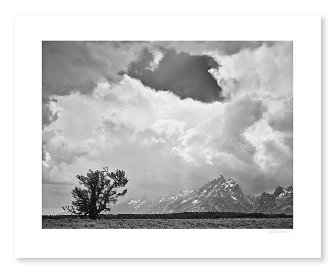 Lone Tree, Teton Range