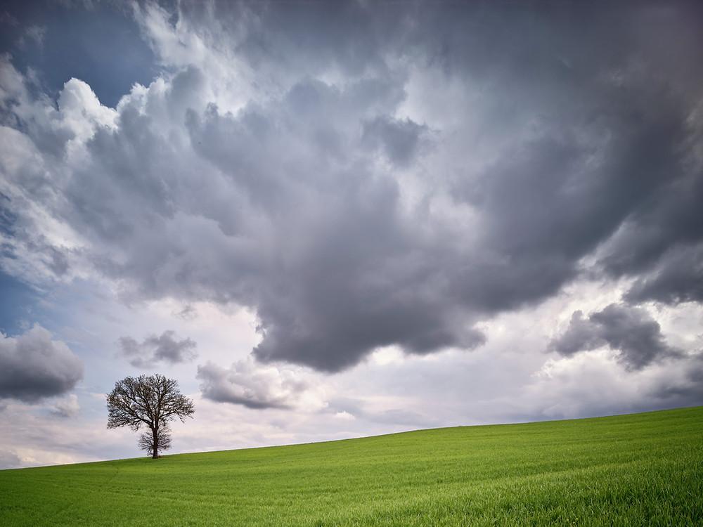 Lone oak tree and cumulous clouds near Pienza.