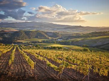 Vines, Ciacci Piccolomini