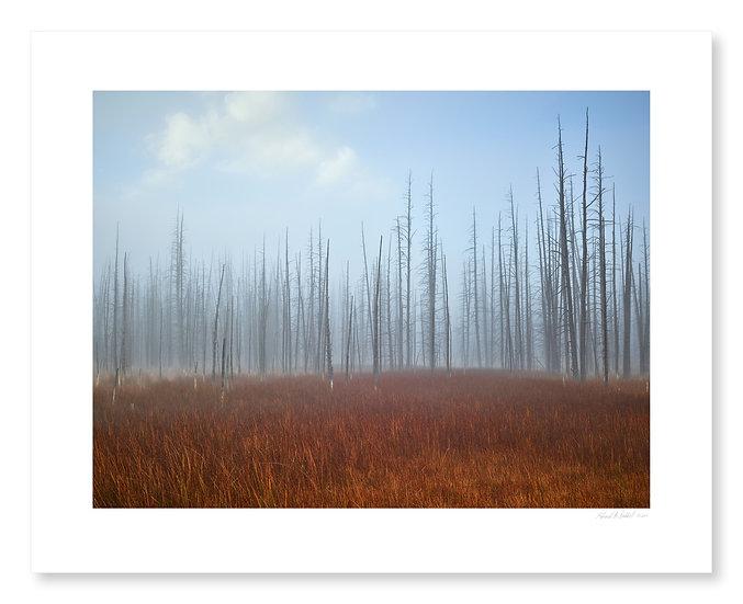 Fog Near Midway Geyser Basic