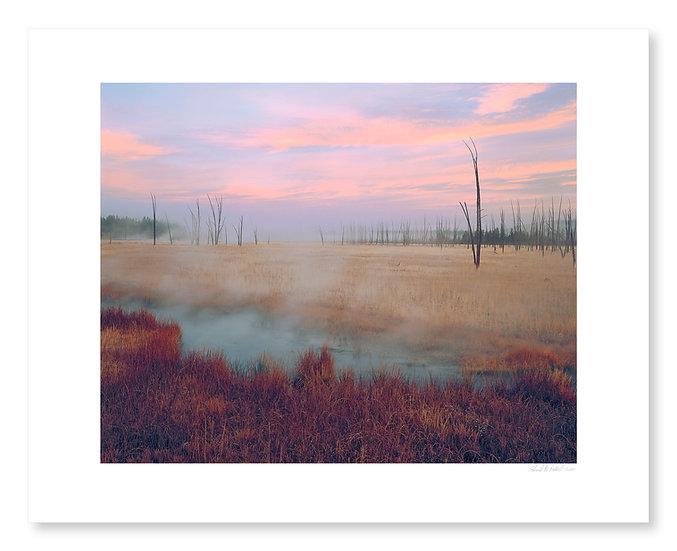 Dead Trees & Sunrise