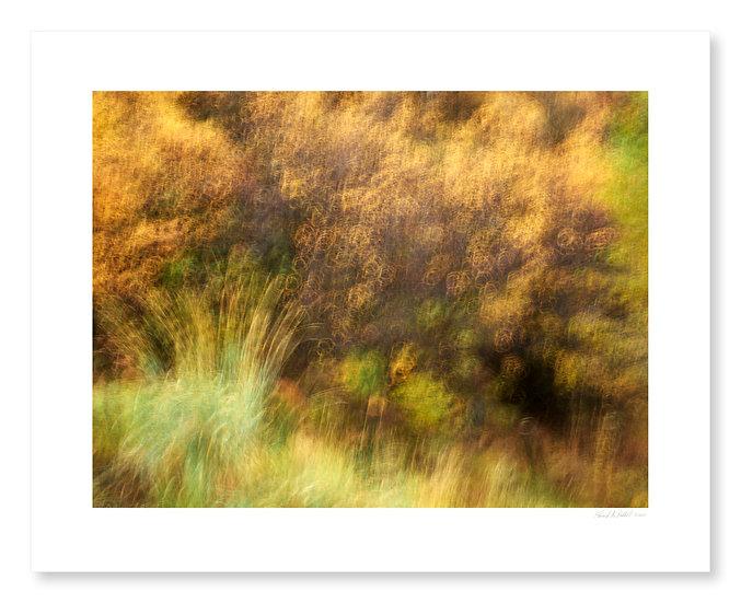 Fall Colors #11