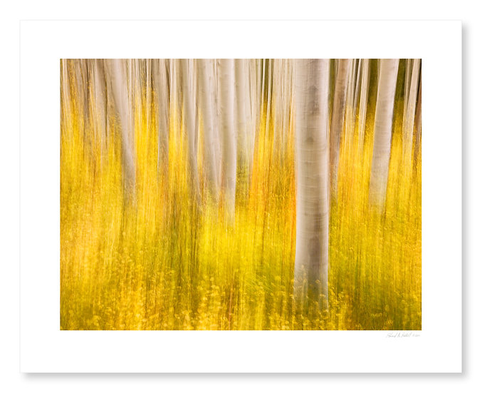 Fall Colors #2