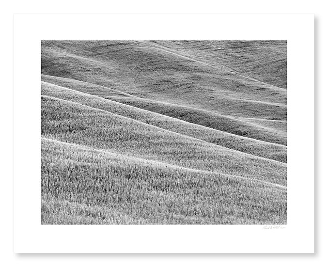 Wheatfield Patterns