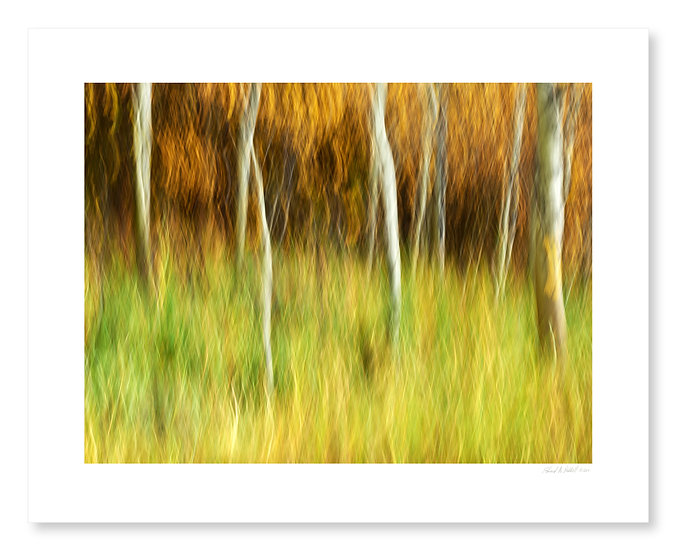Fall Colors #13
