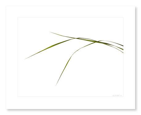 Grasses #113