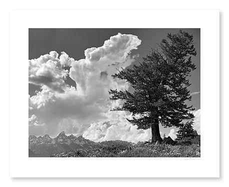 Wedding Tree and Clouds