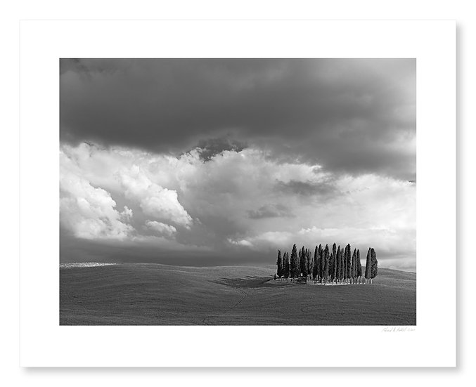 Circle of Cypress, Val D'Orcia