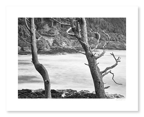 Trees & Surf