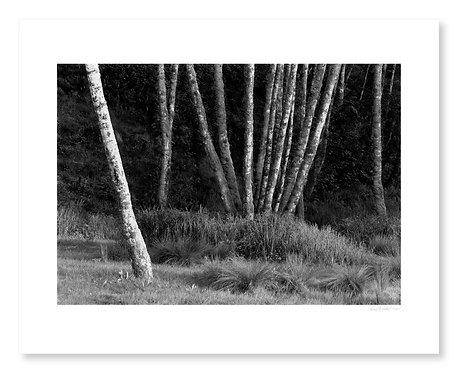 Alders & Grasses