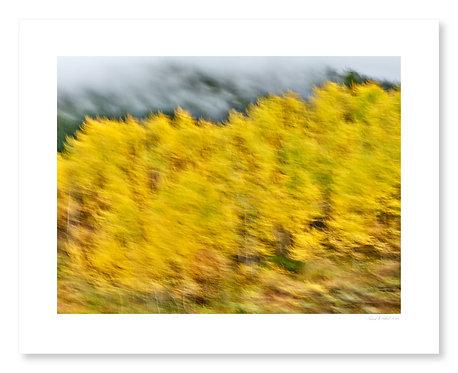 Fall Colors #9
