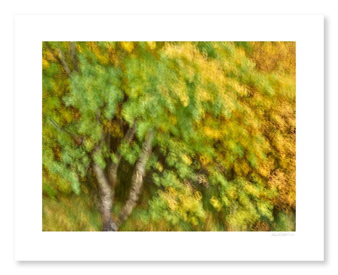 Fall Colors #12