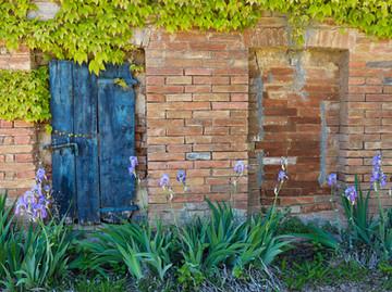 Blue door and iris flowers