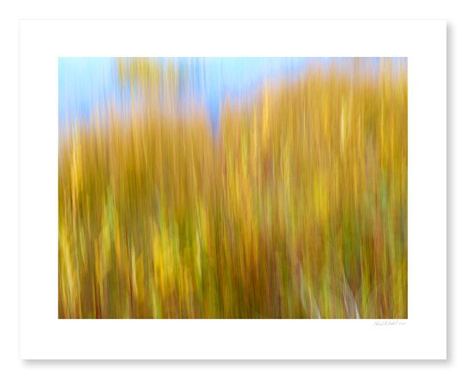 Fall Colors #23