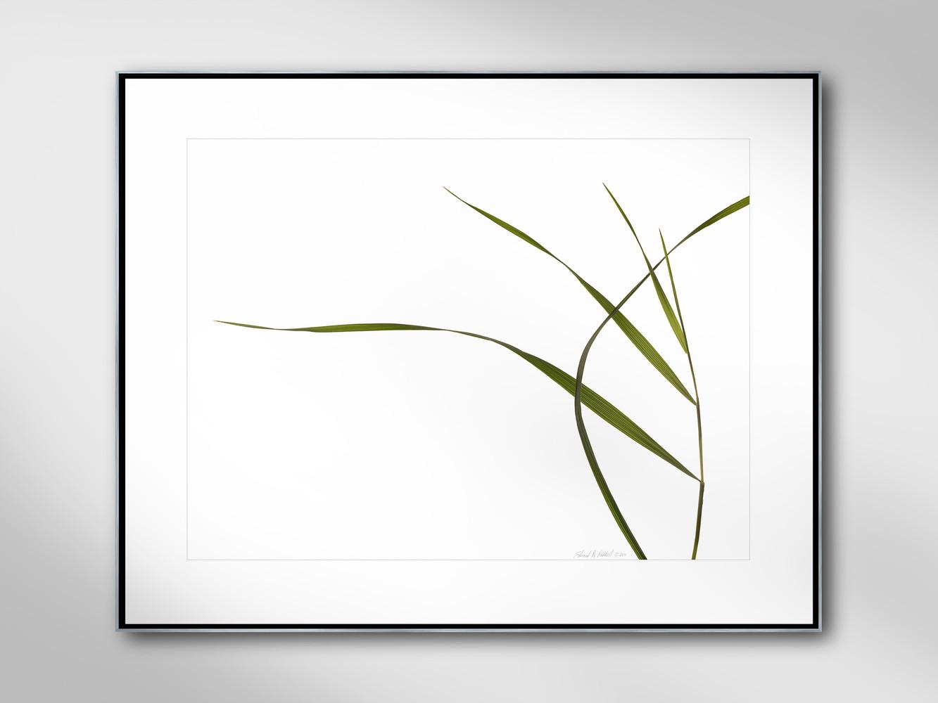 GRASSES #143