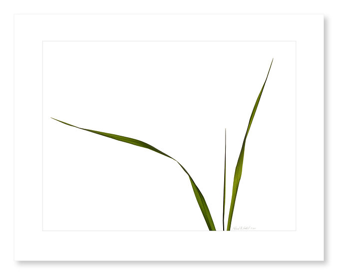 Grasses #110
