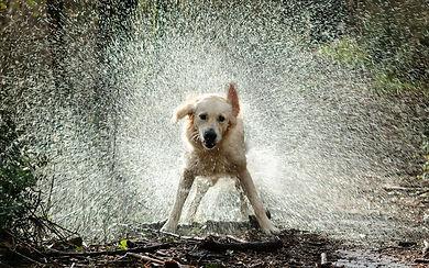 dog shaking water off (2).jpg